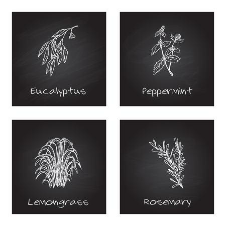 Handdrawn Illustration - Health and Nature Set. Collection of Herbs on Black Chalkboard. Labels for Essential Oils and Natural Supplements. Lemongrass, Eucalyptus, Peppermint, Rosemary Vetores