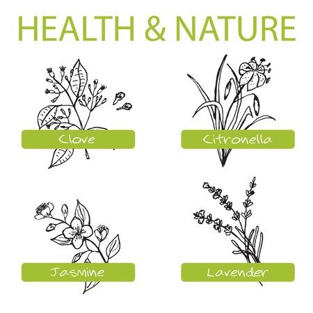 Handdrawn Set - Santé et Nature. Collection d'herbes médicinales. Étiquettes pour les huiles essentielles et des suppléments naturels. Lavande, Citronnelle, Jasmine, clou de girofle