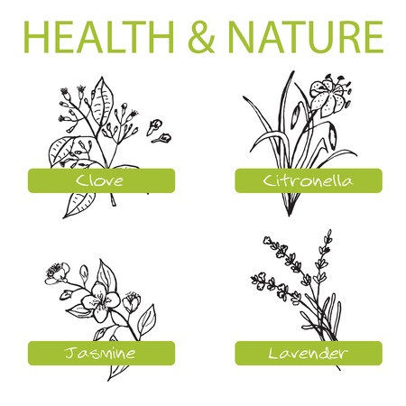 Handdrawn Set - Health and Nature. Collection of Medicine Herbs. Labels for Essential Oils and Natural Supplements. Lavender, Citronella, Jasmine, Clove