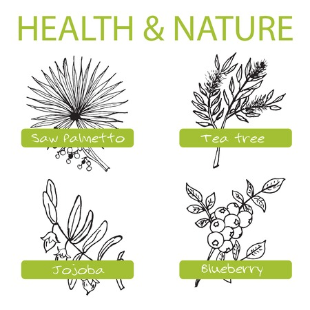 Handdrawn Set - Health and Nature. Collection of Medicine Herbs. Natural Supplements. Saw palmetto, Tea tree, Blueberry, Jojoba