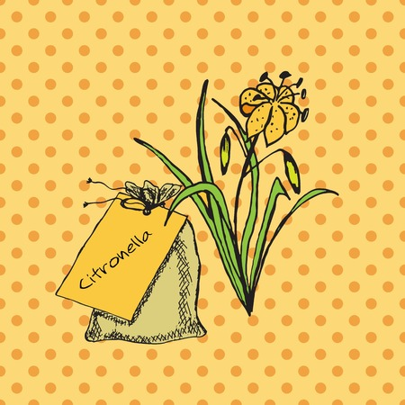 Health and Nature Collection. Herbs and a bag on spotted seamless background. Citronella - Cymbopogon citratus Vectores