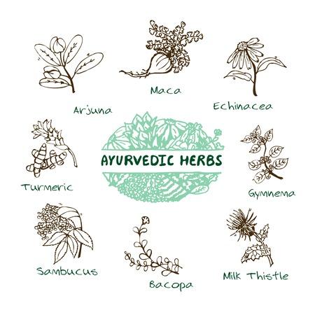 으로 handdrawn 세트 - 건강과 자연. 아유르베 다 허브의 컬렉션입니다. 자연 보조 식품. 심황, 마카, 아르주나, 에키 네시아, 기무 네마, 코파, Sambucus, 우유 일러스트