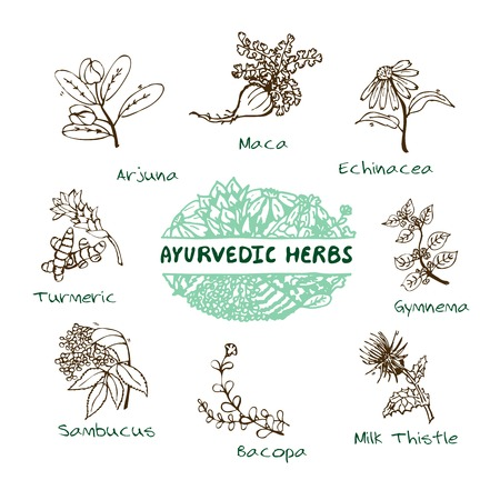 Handdrawn Set - Health and Nature. Collection of Ayurvedic Herbs. Natural Supplements. Turmeric, Maca, Arjuna, Echinacea, Gymnema, Bacopa, Sambucus, Milk Thistle