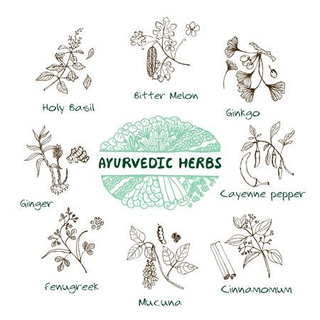 手描きのセット - 健康と自然。アーユルヴェーダのハーブのコレクションです。天然サプリメント。ウコン、マカ、アルジュナ、エキナセア、ギム