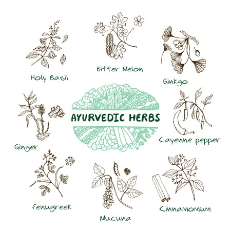 Handdrawn Set - Health and Nature. Collection of Ayurvedic Herbs. Natural Supplements. Turmeric, Maca, Arjuna, Echinacea, Gymnema, Bacopa, Sambucus, Milk Thistle, Bitter melon, Holy Basil, Mucuna, Ginkgo, Cayenne pepper, Fenugreek, Cinnamomum, Ginger Ilustração