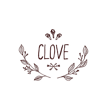 Herbs and Spices Collection - Clove. Handdrawn Vignette. Suitable for ads, signboards, packaging and identity designs