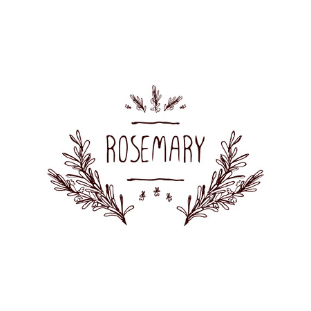 Herbs and Spices Collection - Rosemary. Handdrawn Vignette. Suitable for ads, signboards, packaging and identity designs Ilustração