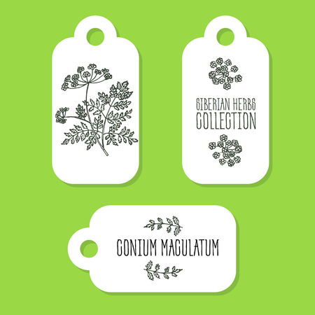 Conium maculatum - Siberian herbs. Handdrawn Illustration - Health and Nature Set of Tags