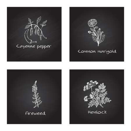 Handdrawn Illustration - Health and Nature Set. Collection of Medicinal Herbs on Black Chalkboard Background. Natural Supplements. Cayenne pepper, Common marigold, Fireweed, Hemlock