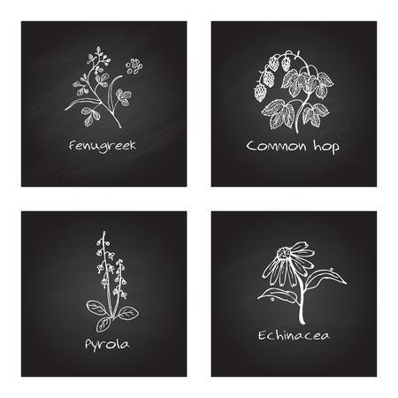 Handdrawn Illustration - Health and Nature Set. Collection of Medicinal Herbs on Chalkboard Background. Natural Supplements. Fenugreek, Common hop, Pyrola, Echinacea Vector Illustration