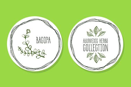 Colección de la hierba ayurvédica. Handdrawn Ilustración - Salud y Conjunto de naturaleza. Suplementos naturales. Etiqueta hierba ayurvédica con Bacopa