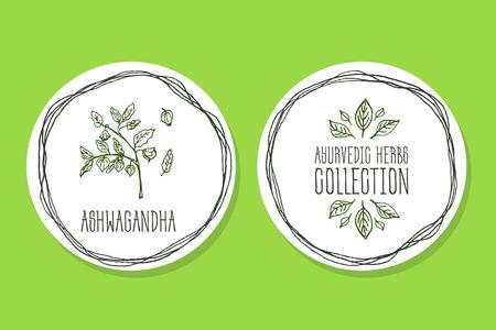 아유르베 다 허브 컬렉션. 으로 handdrawn 그림 - 건강과 자연을 설정합니다. 자연 보조 식품. Ashwagandha와 아유르베 다 허브 라벨 일러스트