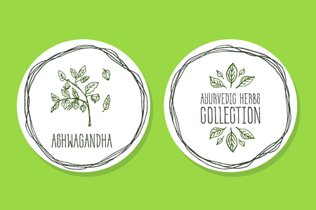Ayurvedic Herb Collection. Handdrawn Illustration - Health and Nature Set. Natural Supplements. Ayurvedic Herb Label with Ashwagandha Illustration