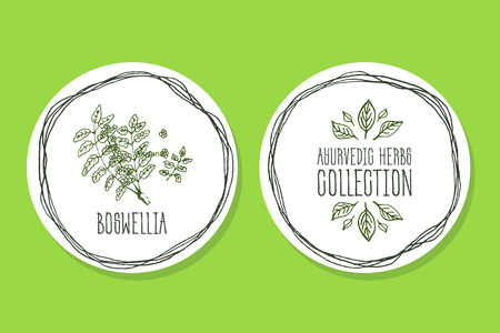 Ayurvedic Herb Collection. Handdrawn Illustration - Health and Nature Set. Natural Supplements. Ayurvedic Herb Label with Boswellia