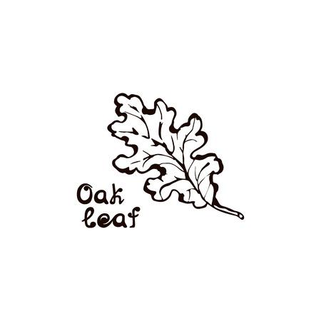 Hand Drawn Oak Leaf with Handwritten Text