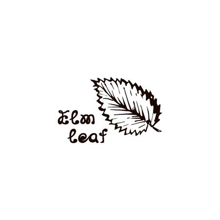 Hand Drawn Elm Leaf with Handwritten Text