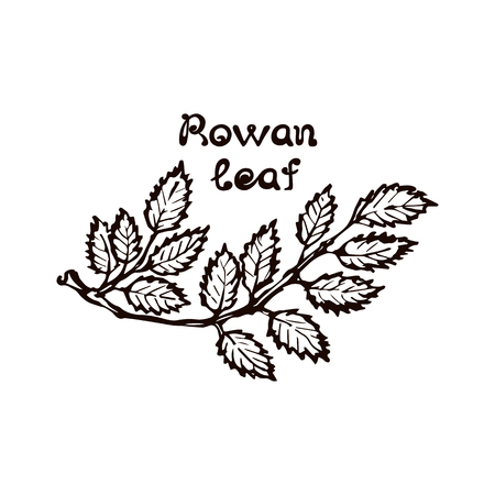 Hand Drawn Rowan Leaves with Handwritten Text  イラスト・ベクター素材