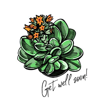 Handdrawn colored greeting card with flatlay succulent and text Stock Illustratie