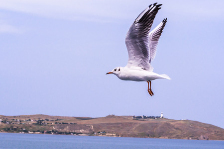 Big white seagull flying over the sea rapidly. A powerful bird in flight, as a symbol of freedom. Also, the bird can characterize the diversity of nature and the need to protect the environment.