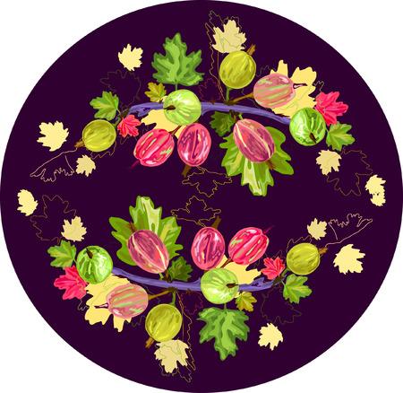 grosella: ilustraci�n de la grosella espinosa