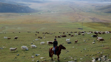 Kazakh man herding sheep on Grassland a, Near Kanas, Xinjiang, China photo