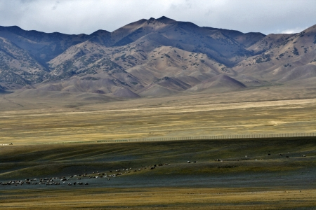 Flock of sheeps on the meadow, Near Sailimu Lake, Xinjiang, China photo