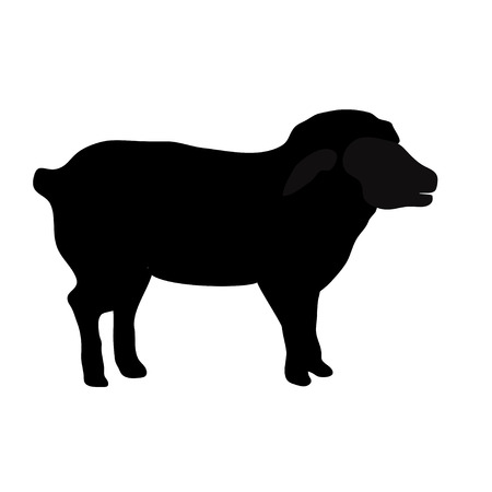 baa: black silhouette of sheep isolated on white