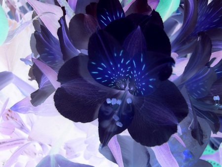 Orchid. Photo with negative effect and contrasts in purple