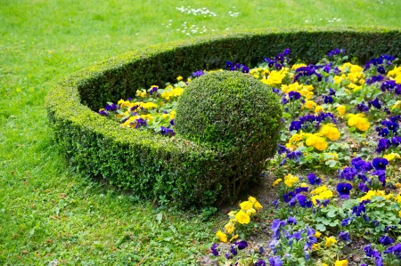 violas: colorful flower bed. violas Stock Photo