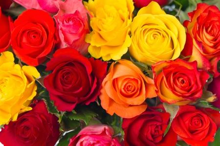 rosas amarillas: Close-up de color rosas surtido sobre fondo blanco