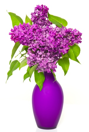 vase: bouquet of lilac flowers in vase on white background Stock Photo