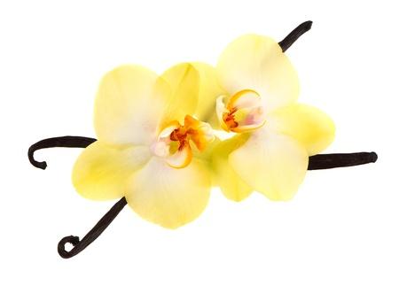 vainas de vainilla y flor de la orquídea aisladas sobre fondo blanco