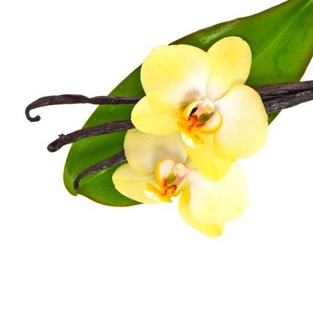 flor de vainilla: vainas de vainilla con flor de la orquídea y la hoja verde aislado en el fondo blanco