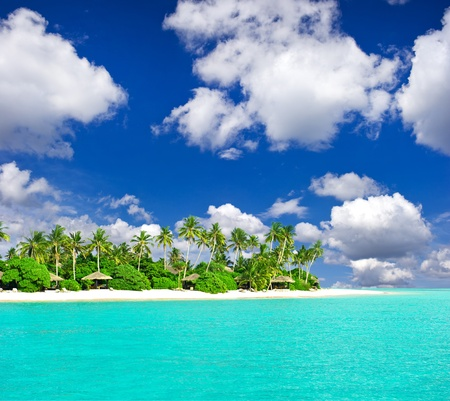 tropical beach with palm trees over blue cloudy sky  holiday background