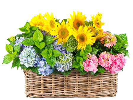 gift basket: colorful sunflowers and hydrangea bushes