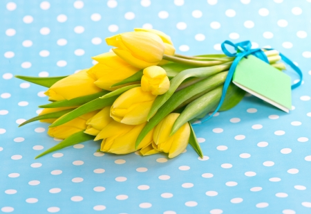 beautiful spring yellow tulip flowers on blue background photo