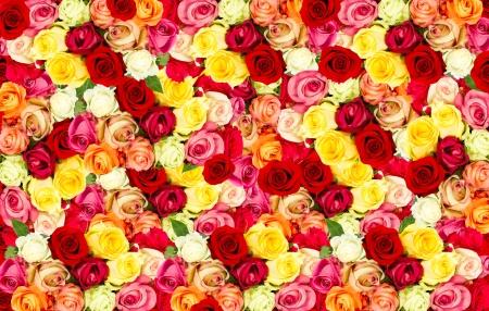 rosas amarillas: rosas surtidos. coloridas flores de fondo Foto de archivo