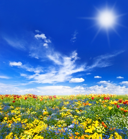 meadow with assorted spring flowers. colorful tulips over sunny blue sky photo