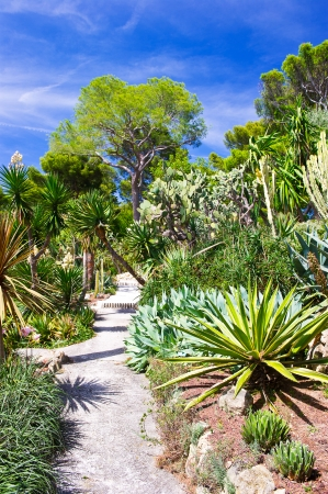 beautiful tropical garden over blue sky  exotic trees and plants photo