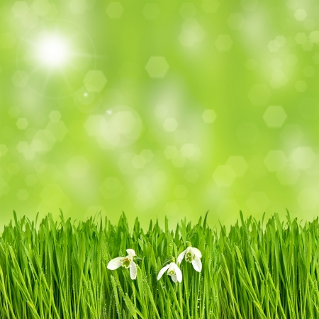 fresh green spring grass with water drops and sunbeams over blurred background  environment concept photo