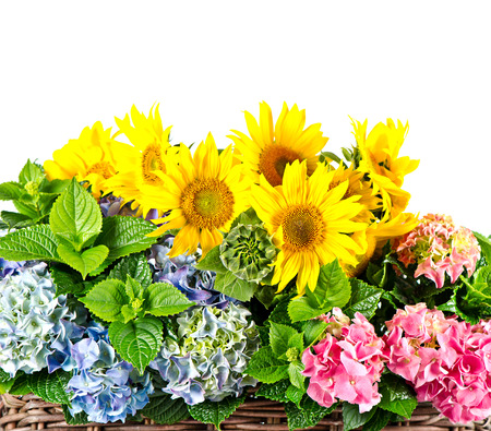 colorful sunflowers and hortensia photo