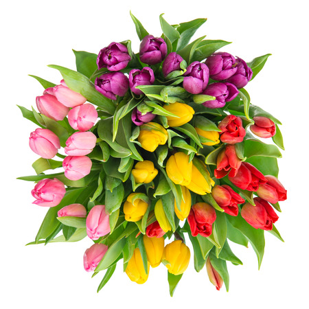 bouquet of fresh multicolor tulips isolated on white background