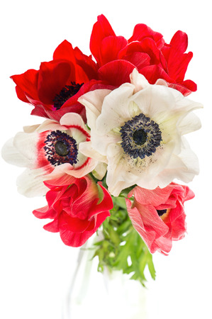 bouquet of red, white and pink anemone flowers isolated on white background