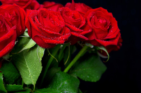 st  valentines day: bouquet of fresh red roses with water drops on black