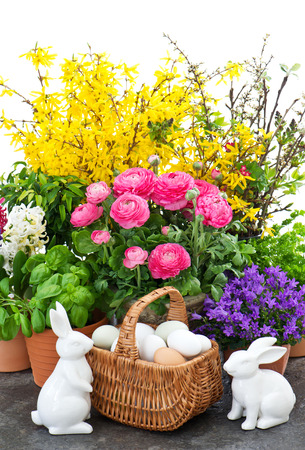 easter bunny couple and spring flowers decoration  raninculus, campanula, forsythia, hyacinth photo