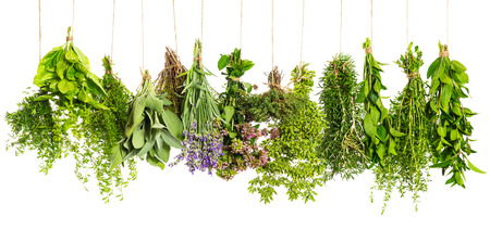 herbs hanging isolated on white background  food ingredients photo