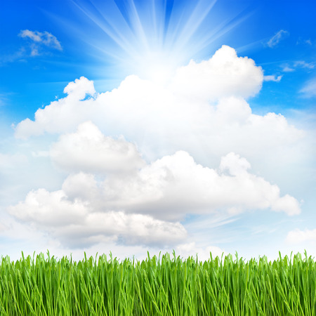 fresh green spring grass with water drops over perfect cloudy blue sky background  environment concept photo