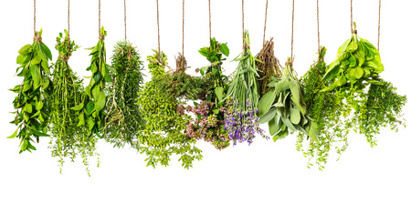 herbs white background: herbs hanging isolated on white background. food ingredients