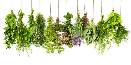 homeopathy: hierbas colgando aislados sobre fondo blanco. ingredientes alimentarios