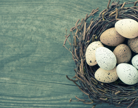 nido de pajaros: aves huevos en el nido sobre fondo de madera de la vendimia. imagen coloreada de estilo retro